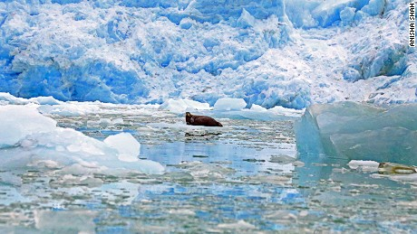 Experts say survival of marine life is entirely reliant on multi-year ice.