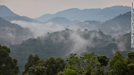 The morning valley mist wafts across the Bwindi Impenetrable National Park in southwestern Uganda.