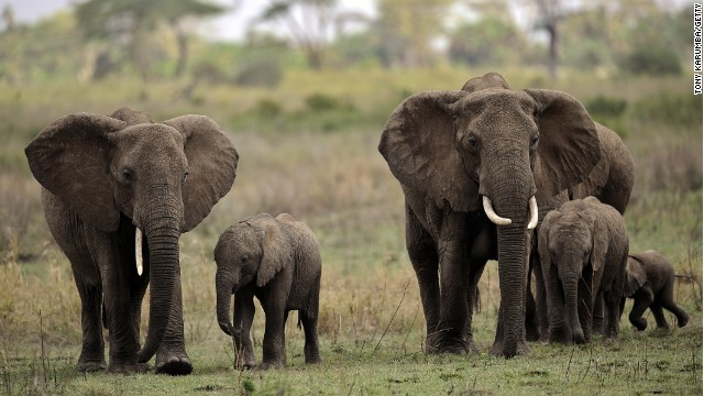 Stressed out? Find sanctuary in sub-Saharan Africa