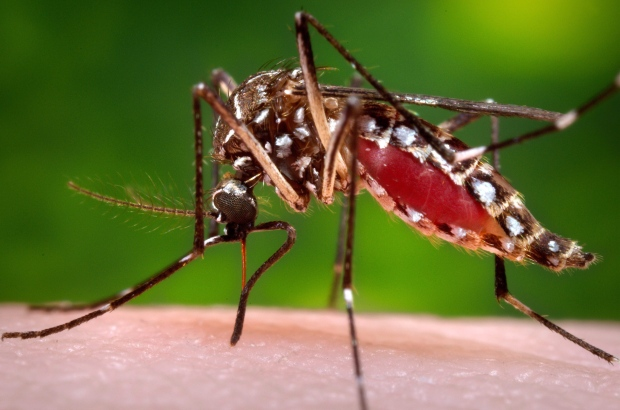 MED-Zika Mosquito-5 Things