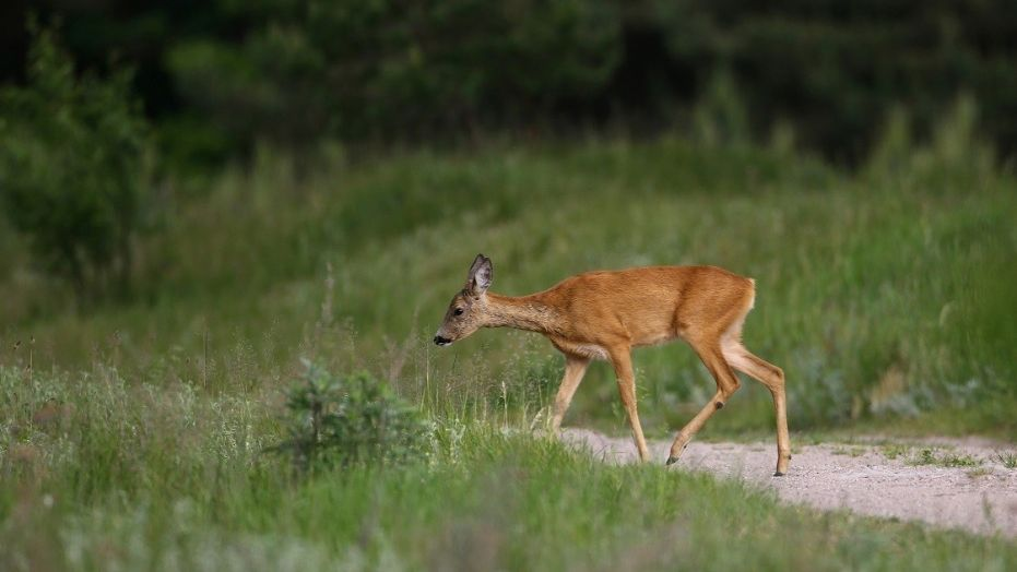An Oregon church might have to cease holding weddings and Bible studies because it sits on a deer range.