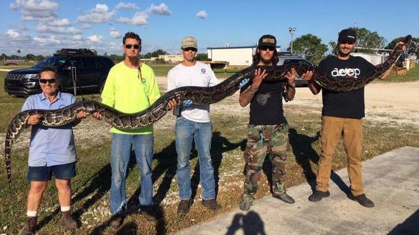 Florida Python 1