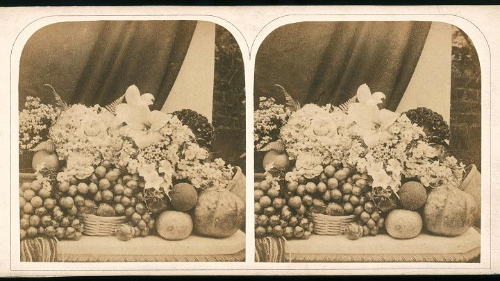 A stereoscopic card depicting a still life with fruit and flowers, circa 1865.